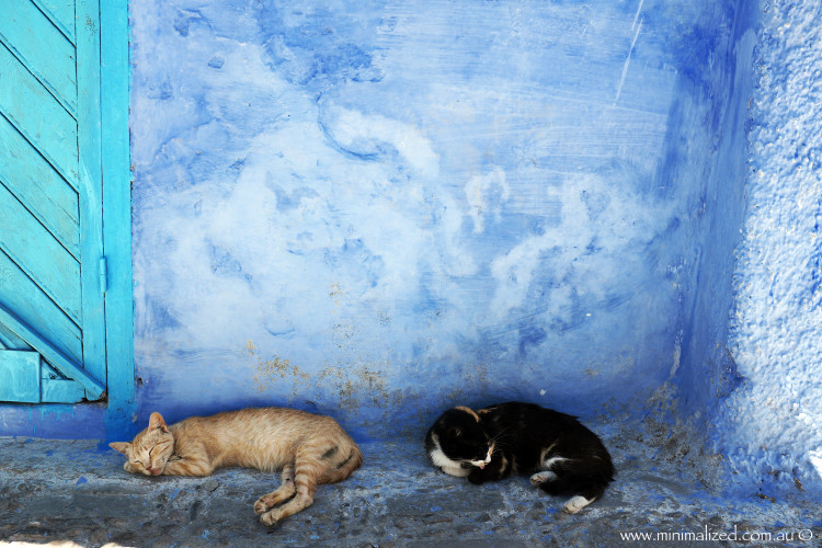 Cats napping in Chefchaouen