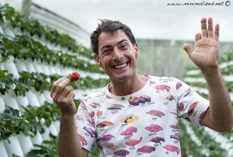 hydropoinc strawberrys Australia